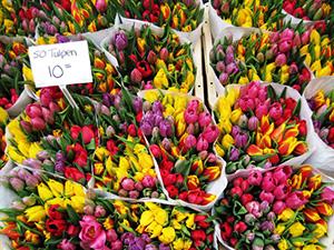 Іщенко тюльпани