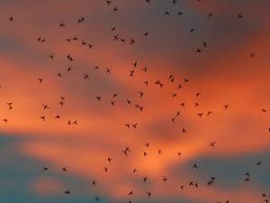комарі фото